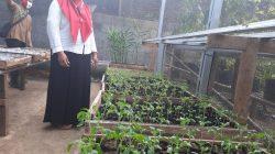 DPRD Cilacap Kagum. Petani Untung Hanya dengan Tanami Pekarangan
