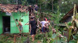 2 Rumah Warga Siluman Rusak Tertimpa Pohon Petai